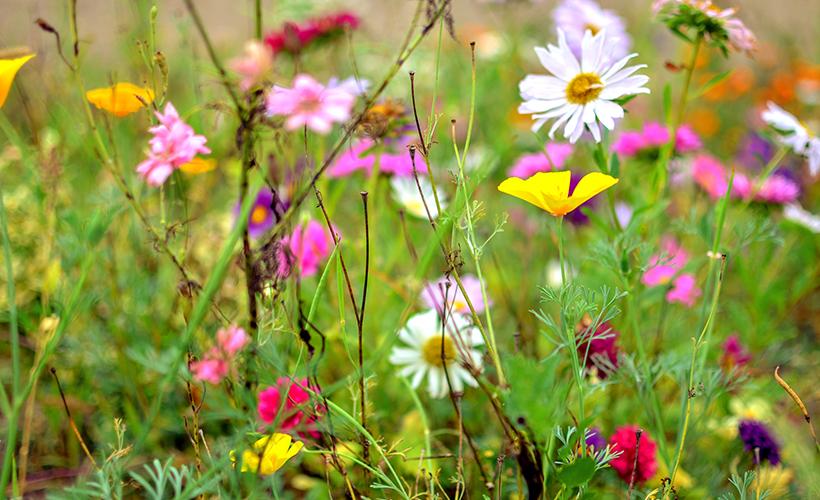Biodiversität erleben